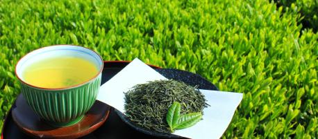 """【第3回】「夏も近づく八十八夜」は、美味しくて体にいい""""新茶""""の収穫期。"""